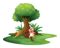 A pig standing under the big tree Royalty Free Stock Photos