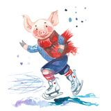 Pig in sweater on skates. 2019 Chinese New Year of the Pig. Christmas greeting card. Isolated on a white background. vector illustration