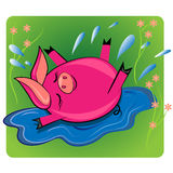 Pig swimmin in puddle.cartoon animal  Stock Image