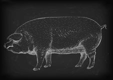 Pig, swine, hog sow piggy piglet piggie pigling brawn boar grown. Big eco farm animal snout. Vector square beautiful closeup profile side view white chalk stock illustration