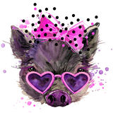 Pig T-shirt Graphics, Pig Illustration With Splash Watercolor Textured Background. Stock Photography