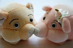 Pig toy. Soft pig toy with white background stock photography