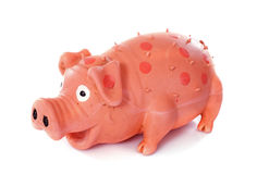Pig toy. In front of white background royalty free stock photography