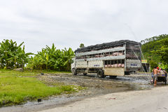 Pig truck, Vietnam Stock Photo