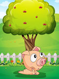 A pig under the tree Royalty Free Stock Photo