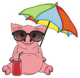 Pig on vacation Stock Photos