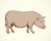 Pig. Vector drawing Stock Photo