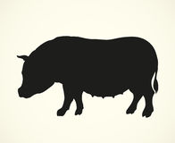 Pig. Vector drawing Royalty Free Stock Photo