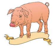 Pig with vintage ribbon Stock Photos