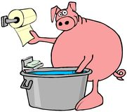 Pig washing and drying its hooves Royalty Free Stock Photography