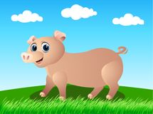 Pig in the wild Stock Photo