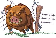 Pig or Wild Boar Crashing Through Fence Vector Cartoon