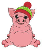 Pig in winter hat Royalty Free Stock Photography