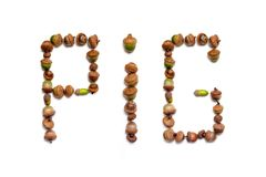 Pig. word made up of acorns of oak. Symbol of the year. The word pig is made up of letters with a unique design from acorns of oak on a white background Stock Image