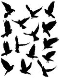 Pigeon. Black silhouettes of pigeon.  vector illustration Royalty Free Stock Photography
