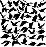 Pigeon. Set of pigeon silhouettes -  illustration Royalty Free Stock Photo