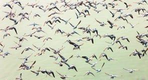 Pigeon abstrait Images libres de droits