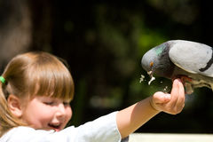 Pigeon alimentant Image stock
