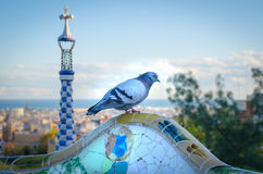Pigeon in the Antoni Gaudi park. Details of a colorful ceramic at Parc Guell designed by Antoni Gaudi, Barcelona, Spain royalty free stock photo