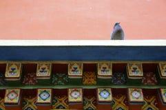 Pigeon asiatique de lignée sur l'architecture du Thibet photographie stock