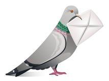 Pigeon avec la lettre Photos stock