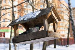 Pigeon at bird feeder house.  royalty free stock photos