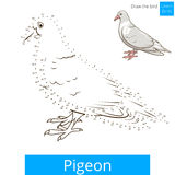 Pigeon bird learn to draw vector Stock Photography