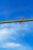 Pigeon bird sitting on a beam on blue sky Stock Images