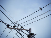 Pigeon bird is sitting on the Electrical powered pillar Stock Photos
