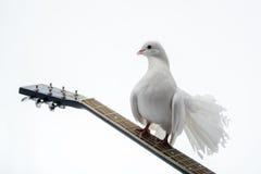Pigeon blanc sur la guitare Image libre de droits