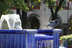 Pigeon in blue fountain Royalty Free Stock Photos