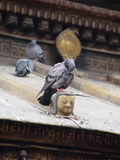 The pigeon and the Buddha. On a roof of a temple Stock Images