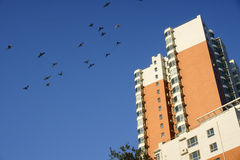 Pigeon and building Royalty Free Stock Photo