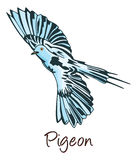 Pigeon, Color Illustration Stock Image