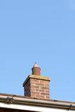 Pigeon (Columbidae) sitting in chimney pot on roof of house Royalty Free Stock Images