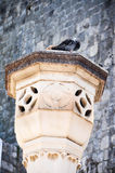 Pigeon on column Stock Images