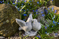 Pigeon couple. In the rock garden - decoration stock photo
