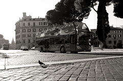 Pigeon crossing street in Rome, black and white Royalty Free Stock Images