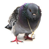 Pigeon with crystal pendant on white Royalty Free Stock Image