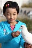 Pigeon d'alimentation des enfants Photographie stock libre de droits