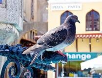 Pigeon dans la place photo stock