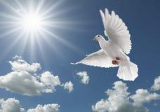 Pigeon dans le ciel photographie stock libre de droits