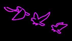Pigeon de lumière de Nero Photographie stock libre de droits