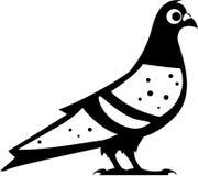 Pigeon Dove Black n White vector Stock Photo