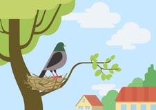 Pigeon dove flat design cartoon vector wild animals birds. Pigeon (male dove) on street tree branch nest flat design cartoon vector wild animals birds. Flat zoo Vector Illustration