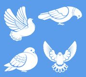 Pigeon or dove, white bird flying with spread wings in sky or sitting set. Vector logo template or isolated symbol icon of peace freedom or post mail delivery Royalty Free Stock Photography