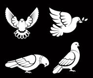 Pigeon or dove, white bird flying with spread wings in sky or sitting set. Vector logo template or isolated symbol icon of peace freedom or post mail delivery Stock Photos