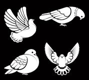 Pigeon or dove, white bird flying with spread wings in sky or sitting set. Vector logo template or isolated symbol icon of peace freedom or post mail delivery Royalty Free Stock Photo