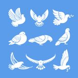 Pigeons or white dove birds flying wings vector flat isolated icons. Pigeon or dove, white bird flying with spread wings in sky or sitting set. Vector logo Stock Image