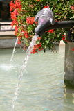 Pigeon drinking from a fountain Stock Photography